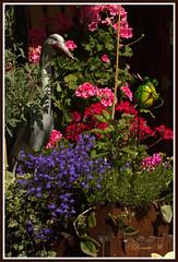 Blütenpracht (Renata1109) Tags: blumen blüten sommer farbenspiel farbenpracht colors sonne
