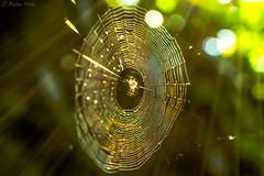 rays of light (martinap.1) Tags: nikon 40mm macro d3300 web netz spinnennetz rays light sun makro sonnenstrahlen licht sonne hell bokeh