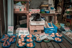 Shopkeeper (debbykwong) Tags: shopkeeper cat groceriesstore nagasaki chinatown japan streetcaptures streetphotography streetmoment streetmood colorurban travel travelphoto travelphotography street streetincolor leica leicaq leicaqtyp116 leicacamera leicaphoto