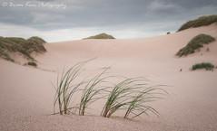 Dune Grass (.Brian Kerr Photography.) Tags: scotland sandwoodbay scotspirit seascape seascapephotography dunes grasses grass sand beautiful photography landscapephotography nature naturallandscape natural outdoor outdoorphotography scottishhighlands scottishlandscapes photo sandybeach sony a7rii