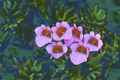 Flora Abstract! (maginoz1) Tags: abstract art flowers foliage curves manipulate alisterclarkmemorialgarden bulla victoria australia winter june 2017 canon g3x