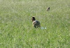 Women (Wolfgang Bazer) Tags: wildlife steinhofgründe steinhof ambrose bierce wien vienna österreich austria