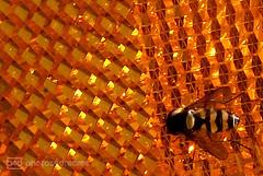 hoverfly likes the spoke reflector (photos4dreams) Tags: gersprenz05072017p4d gersprenz münster hessen germany naturschutz nabu naturschutzgebiet photos4dreams p4d photos4dreamz nature river bach flus naherholung
