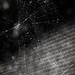 Spiderweb art