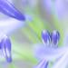 secret story (hitohira_) Tags: flower flowers nature bokeh