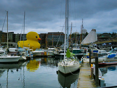 """Cluster Duck"" (1bluecanoe) Tags: mamaduck tacoma wa yellow ducky festival sail thea foss waterway 1bluecanoe buoyant"