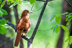 Thank you Buzz Miller for sharing these wonderful photos of birds in #Brambleton. #nature #ashburn #bramlife #loveva #loveloudoun #loudoun (Brambleton) Tags: thank brambleton nature ashburn bramlife loveva loveloudoun loudoun