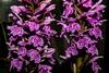 Dactylorhiza maculata (betadecay2000) Tags: beta erdorchidee orchidee orchideen terristische terristisch pflanze plant bloom blüte blüten flower pantoffel frauenschuh ladys lady ladies slipper outdoor fleur blume orchid orchieen botanisch orkidea orhidee орхидеи orchidée 蘭花 রাস্না խոլորձ 난초 orchidej خصي orkideo orhideja सुनगाभा オーキッド กล้วยไม้ סחלב orquídea anggrek orchidea ορχιδέα orkide אָרכידייע орхидея आर्किड dactylorhiza knabenkraut knabenkräuter deutschland germany geophyt