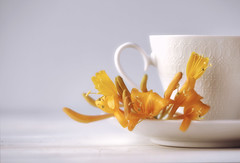 (donna leitch) Tags: flowers vine honeysuckle tea teacup saucer stilllife donnaleitch macro 100mm