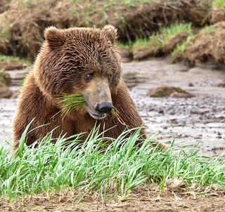 I'll have the salad