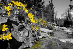 DSCF6143_EDIT (Miroslav Pivovarsky) Tags: vysoke tatry slovak slovakia natur nature outdoor fujifilm x70 mountains hiking hikings strbske pleso tarn flow sun day sunday