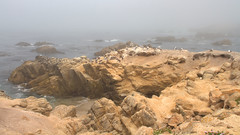 IMG_0214_216 Seagull HDR (vicjuan) Tags: 20170625 美國 usa 加州 california montereycounty hdr tonemapping pebblebeach geotagged geo:lat=36591925 geo:lon=121964157 海 sea 太平洋 pacificocean 鳥 bird 海鷗 seagull