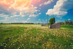BB Brown (Luxury of Freedom) Tags: background beautiful beauty blooming blue clouds cloudy color colorful dandelion field floral flower garden grass grassland green image landscape leaf light meadow morning nature outdoor parachute rural sky spring summer sun sunny travel vintage white wild