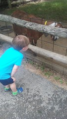 """Paul at the Deanna Rose Children's Farmstead • <a style=""""font-size:0.8em;"""" href=""""http://www.flickr.com/photos/109120354@N07/35567817301/"""" target=""""_blank"""">View on Flickr</a>"""