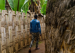 Man passing along a traditional dorze house made of bamboo and enset leaves, Gamo Gofa Zone, Gamole, Ethiopia (Eric Lafforgue) Tags: abyssinia adult africa african bamboo buildingexterior day developingcountry dorze eastafrica enset ethiopia ethiopia0617592 falsebanana fence gamogofazone gamole home horizontal hornofafrica house hut indigenousculture onemanonly onepersononly outdoors palmleaf rearview tall thatch thatchedroof toukoul traveldestinations tukul village