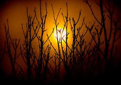 (ChicqueeCat) Tags: sunrise sunset cloudy silhouette trees landscape portrait nature nikon d3300