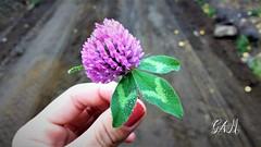 Invernal (micaelagallialcazar) Tags: frio gotas flor flora neuquen invierno