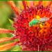 Green Bees
