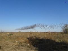 Зверушки 0133 (2014.10.27) (vladsky78) Tags: ильичёвск небо птицы зелень поле