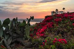 Mixed Emotion (sosidesc) Tags: sunset capo gazebo cactus