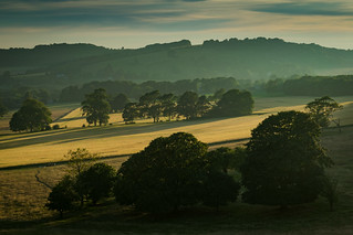 Cissbury Fields - A Golden Evening