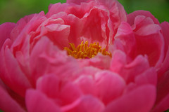 S.MasséMaisonduMajordome©TourismeHautLimousin-49 (tourisme_hautlimousin) Tags: jardin gîte vacances hautlimousin patrimoine location fleurs botanique tourolim