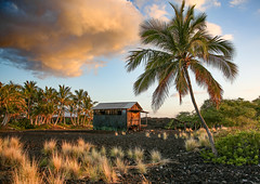 Hawiian Shack (Rennett Stowe) Tags: hawaii hawaiianshack littlegrassshack hut oldhut classichawaii tree trees unitedstates stateofhawaii bigisland bigislandofhawaii heaven paradise cloud clouds sunset scene bucolicscene rural poor ruralpoor hawiianpoor poorpeople poorhouse hardlife richandpoor happylife poorhappylife livinglarge dontneedmoneytobehappy offthegrid livingoffthegrid lonepalmtree plamtree palmtrees coconutpalm middleofnowhere nowhere poorinamerica beachhouse livingbythebeach delapadated rundown needsapaintjob july2017 jungle jungleliving junglelife hawiianjungle backyard bigbackyard landscaping lifestyle uniquelifestyle weirdlifesytle canon canoneos5dmarkiii rough poverty ruralpoverty faraway ebt palmfronds lava lavarock lavarocklandscaping naturallandscaping hawaiian hawaiiansunset explore outoftheway offthebeatenpath offthemap shack