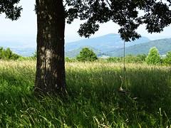 (ctjasa) Tags: tree hill swing childlike freedom playful play grass
