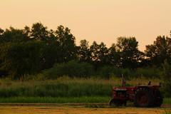 Tractor in field (stevenluchtmeijer) Tags: tractor trekker field veld weiland