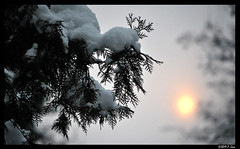 After the Blizzard... - Anshan, Liaoning, China (SpottingWithTom) Tags: evergreen leyland cypress plant snow beautiful hazy air pollution mountain anshan china storm sun sunset light