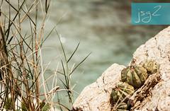 Puerto Escondido, Cépe (Edo. Aragua - Venezuela) (jsg²) Tags: venezuela veneadictos paisajesdevenezuela bellezasdevenezuela jsg2 fotografíasjohnnygomes johnnygomes fotosjsg2 américadelsur sudamérica suramérica américalatina latinoamérica veneadictosazules cépe choroní costasdearagua estadoaragua puertoescondido azules