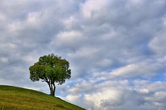 6D_IMG_1020z (A. Neto) Tags: 6d canon canon6d eos tamron tamron28300divcpzd color landscape tree sky clouds grass nature