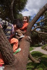 Sam Bournemouth-8.jpg (Reasonable Jim) Tags: bournemouth cassius dante southbourne climbing tree treeclimbing