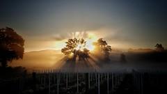 Buongiorno di fine giugno (Paolo Perco Thank you all for + 1.500.000 visits!!) Tags: preval giugno panorama nebbia fog gorizia görz landscape collio