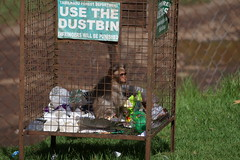 Use The Dustbin (selvan-tamilmani) Tags: nature photo photography travel ooty outdoor southindia india street animals cage tamilnadu daylight savenature avoidplastic saveforest forest protectnature gogreen