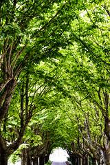 ...In fondo al Tunnel..? (Paolo.Venarucci) Tags: canon natura color eos 600d gualdo gualdotadino nature landscape umbria green estate tamron helio helios helios442258mm