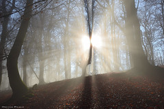 Delírium trémens (Hector Prada) Tags: bosque niebla sol bruma luz rayos árbol atmósfera magia naturaleza forest fog light sun mist sunbeams tree shadows winter