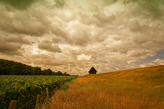 Clouds And Corn (Alfred Grupstra) Tags: nature ruralscene agriculture landscape field farm scenics outdoors sky cloudsky summer beautyinnature nonurbanscene hill nopeople meadow sunset land landscaped plant