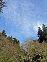 SequoiaPark032413j (homeboy63) Tags: spring 2013 humboldt sequoiapark eureka