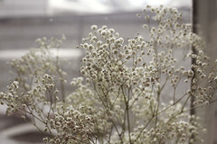 Little White Flowers Pt. I (Miss Marisa Renee) Tags: marisarenee digital canon flowers floral babys breath 2016 december december2016 diptych two part shallowdepthoffield canon5dmarkii