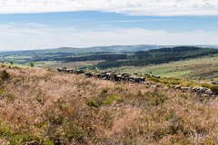 Dartmoor National Park (Keith in Exeter) Tags: dartmoor nationalpark devon moorland landscape grassland flowering stone wall trees forest hills outdoor