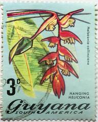 Guyana 3 cents Heloconia