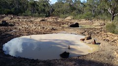 Ponds filled after rain May 2017 (OEHmedia) Tags: habitatrecreation wildlife threatenedspecies abandonedquarry worrigeenaturereserve greenandgoldenbellfrog