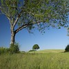 Auprès de mon arbre ... **---+°-°-° (Titole) Tags: trees squareformat titole jura countryside field nicolefaton perepetual challengegamewinner 15challengeswinner challengeyouwinner