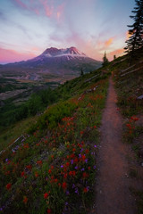 Trail Of Glory Into Sunset On Mt St Helens (kevin mcneal) Tags: unitedstates washingtonstate pacificnorthwestregion skamaniacounty cascaderange pacificringoffire lavarock norwaypass bestplacesinwashingtontoseewildflowers touristdestinationsofwashington mtsthelens sainthelens washington wildflowers springwildflowers spring seasons mountsainthelens volcano 1980eruption kevinmcneal kevinmcnealphotography kevinmcnealphotographyphotographytours nikond810 nikon singhrayfilters toutle