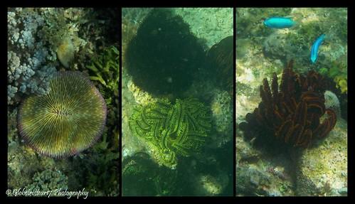 Différents coraux durs et mous- Gili Layar au nord de Gili Gede- Sud-Ouest de Lombok- Indonésie- Indonesia