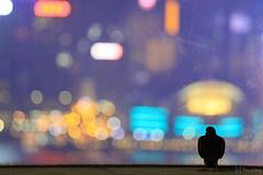 "the ONE ""Sky Garden"" at Night (tomosang R32m) Tags: theone skygarden gardenterrace garden terrace skyline hongkong kowloon nathanroad 香港 九龍 尖沙咀 彌敦道 商場 展望 yakei night fog 夜景 dusk twilight tsimshatsui symphonyoflights 幻彩詠香江"