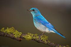 Electric Blue (E_Rick1502) Tags: