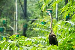 IMG_2501 (Ajith Panayil) Tags: bird wild wildlife zoo trivandrum tri trip nature landscape