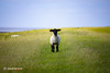 vis-à-vis (stadtbrautphoto) Tags: visàvis gegenüber towards lamm lamp deich dike dyke deichschaf heidschnucke heidschnucksheep tier tierisch animal entspannt relax sommer summer friesisch frisian friesland frisia weitesland broadland vastcountry erholung recovery auszeit timeout watt wattenmeer mudflat sheep schaf landschaft landscape landschaftspflege countryside natureconservation flach flat ebene plane level schafzucht sheepfarming sheepbreeding naturteppich naturalcarpet blauerhimmel bluesky farbspiel interplayofcolours summerholidays betrachter viewer wiesen grassland meadows felder fields nationalparkwattenmeer waddenseanationalpark idyllisch idyllic ruhig silent quiet typisch typical insel island